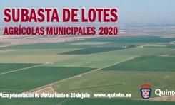 El Ayuntamiento saca a subasta 174 lotes de cultivo